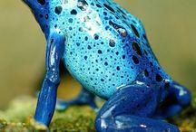 Amazing pictures-Amphibians