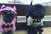 DC Super dogs