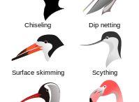 Bird Encyclopedia