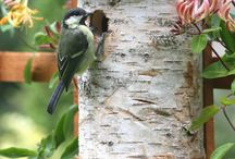Birds & bees: wildlife garden / Wildlife gardening - providing homes for birds, bugs & hedgehogs, and planting flowers for bees