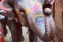my elephant addiction