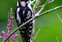 The birds of summer, Victoria, BC Canada