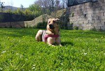 Mia dog