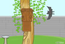 Bat Garden Project / Working to attract / help bats - ideas