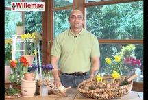 Astuces et conseils de Willemse / En vidéos ou sous forme d'article, découvrez les conseils de nos experts Willemse qui vous aideront à obtenir le plus beau des jardins !
