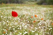 Las flores y plantas del Parque Nacional de la Sierra de Guadarrama / Exploramos la asombrosa diversidad de la flora del Parque Nacional de la Sierra de Guadarrama, en las cuatro estaciones del año.