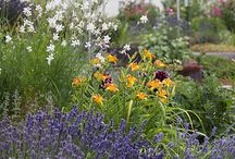 Garten pflegeleicht