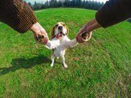 Dog Walking with Hugo & Otto