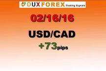 Daily Forex Profits Performance 02/16/16 - Dux Forex