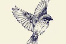 πουλιά