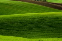 Landscaped / Nature- touched by man, to enhance its beauty even more. Vast stretches og fields with beautiful bed of flowers or crops or just prunned. / by Anindita Dasgupta