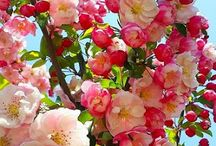 fiori miei