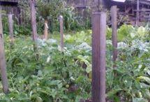 Zeleninová záhradka