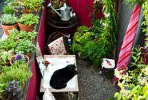 Tiny Gardens / by Nicola Carley