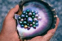 Black pearl craze