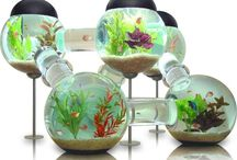 Fish Tanks <~~~~{{{ / Here fishy fishy fishy :) / by Theresa Pulley