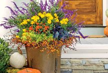 Spectacular Containers! / Don't have space for large flower beds or borders? Containers are your answer! Here you'll find easy to do containers with ideas on placement and color choices.