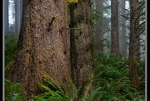 Forest Adventures / Past, present and future adventures into beautiful forests. / by Bradley Leese