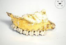 MOTH || osteology / Bones, skulls, anatomy