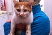 A l'adoption (Action For Pets)