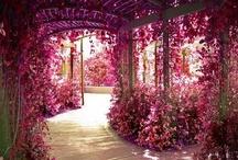 Kvety a ruže