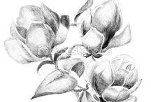 szkice tauaży