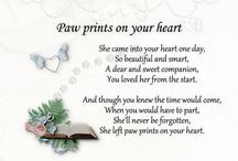 pawprints in my heart 2