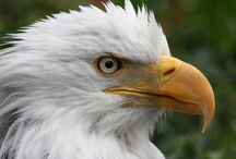 ANIMAL - AWESOME OF ALLAH CREATION - ANIMAL / Awesome Animals