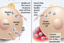 Insulin Resistance - Metabolism B