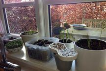 The Window Garden 2014