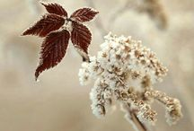 Flowers and Plants in Winter