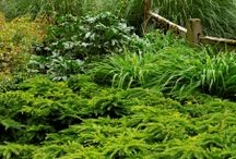 Mixed Evergreen Hedges / Evergreen hedges can be all the same shrub or a mix. You can even add in some flowering deciduous shrubs for season-long interest. Use natives whenever possible to support local wildlife.