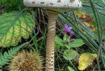 Amazing Mushrooms