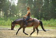 Our stallions / quarterhorse stallion