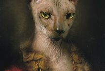 Sphynx cat / There are cats and than there is the Sphynx!