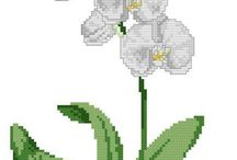 x-orhidea-magnolia