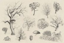 drawing bushes&trees&flowers