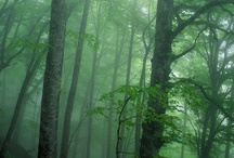Кавказский лес