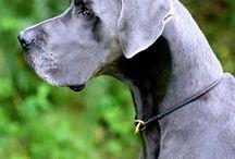 Fina hundar som kan bo i vårt slott