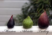 Fig trees ❤️