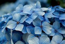 Flowers / by Cristina Garcia