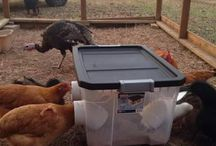 chicken feed bins