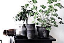 Plantas y sus accesorios - Plants and its accesories / Las plantas son geniales para decorar... ¡Aquí van algunas ideas! - Plants are great to decorate... here you can find some good ideas!
