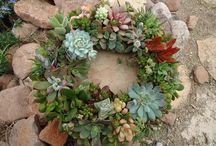 Plants & Landscaping