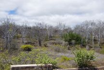 Galapagos 2014 / Bits of Nature we saw in the Galapagos Islands July 2014