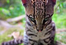 exotic cuties