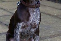 Gundog-hunting dog / by Ty Truitt