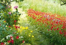 Meadows,flowers,roads