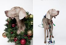 Holiday Pet Portraits
