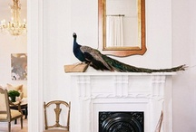 Have Some Decorum Decorating with Taxidermy